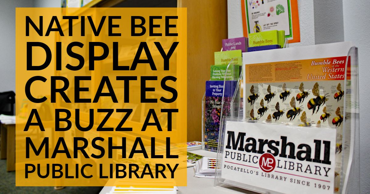 A look at the life of bees native to the United States is at the Marshall Public Library.