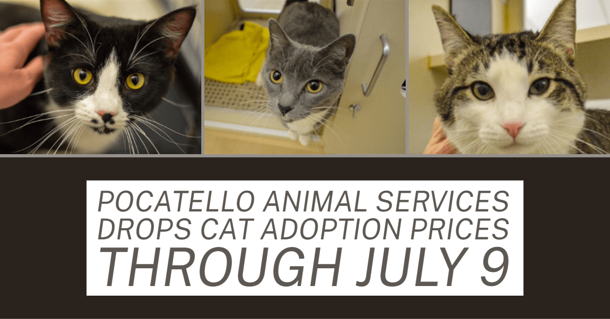 Adoptable cats at the Pocatello Animal Shelter