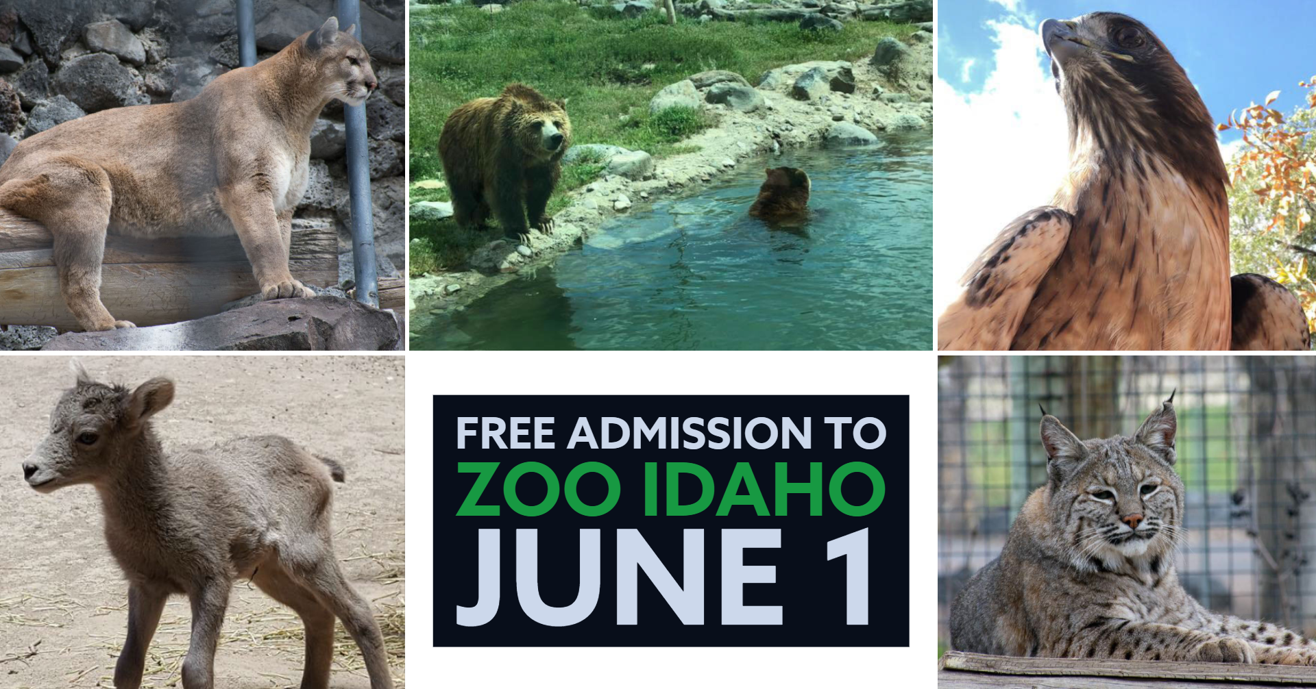 The animals at Zoo Idaho.