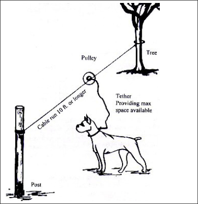 Diagram illustrating how to properly tether a dog