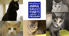 Cats available for adoption at the Pocatello Animal Shelter