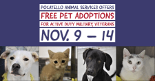 Dogs and cats available for adoption at the Pocatello Animal Shelter.