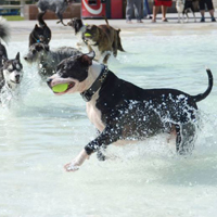 Splash Dance for Dogs